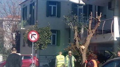 Δήμος Σερρών : Ξεκίνησε το κλάδεμα των δέντρων