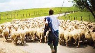 Σέρρες : Μέτρα στήριξης ζητούν οι κτηνοτρόφοι