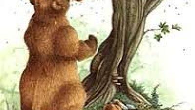 Δήμος Σερρών : Αρκούδα έκανε την εμφάνιση της στο Χριστός