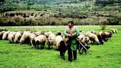 ΚΚΕ Σερρών : Άμεσα μέτρα στήριξης των  γεωργών και κτηνοτρόφων
