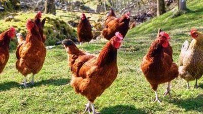 Δήμος Ηράκλειας : Προσπάθησαν να αρπάξουν χρυσή  αλυσίδα ..αλλά … έκλεψαν τις κότες