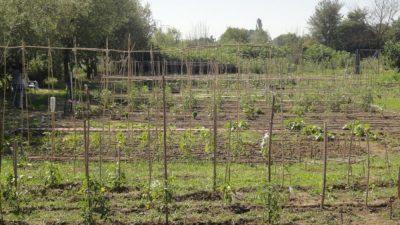 Δήμος Σερρών : Αιτήσεις για τον δημοτικό λαχανόκηπο