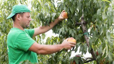 Αγροτικές Συνεταιριστικές Οργανώσεις  Ημαθίας ζητούν εργάτες γης
