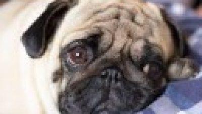 Δήμος Βισαλτίας : Ιδιώτης κτηνίατρος για τα αδέσποτα