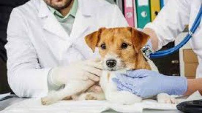 Δήμος Σερρών: Ξεκινά πρόγραμμα μαζικών στειρώσεων αδέσποτων ζώων
