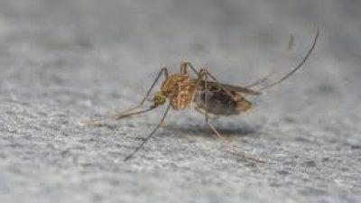 Δήμος Σιντικής : Νέο κρούσμα ιού του δυτικού Νείλου στην Ροδόπολη