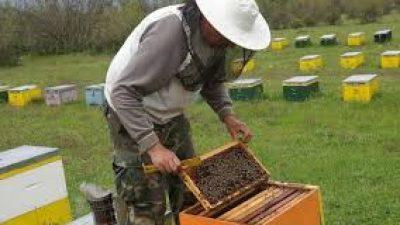 Σέρρες : Ξεκίνησαν οι δηλώσεις κατοχής κυψελών από τους μελισσοκόμους