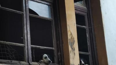 Δήμος Βισαλτίας : Φόβος και τρόμος από τα αδέσποτα στην Νιγρίτα