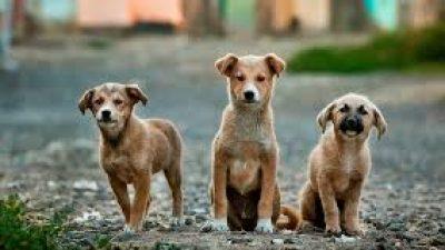 Δήμος Σιντικής : Συγκρότηση επιτροπής διαχείρισης  αδέσποτων ζώων ( ονόματα )