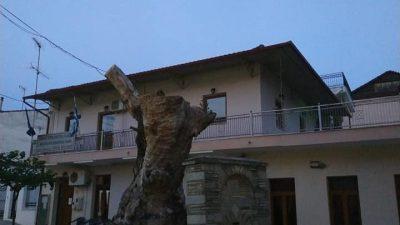 Δήμος Εμμανουήλ Παππά : Ο Πλάτανος στο Νέο Σούλι έχει την δική του ιστορία