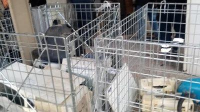 Δήμος Αμφίπολης :  Προτεραιότητα   η ανακύκλωση