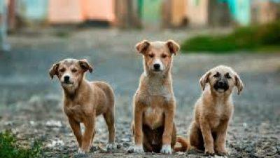Δήμος Ηράκλειας : Υποχρεωτικη η σήμανση και καταγραφη των ζώων συντροφιάς