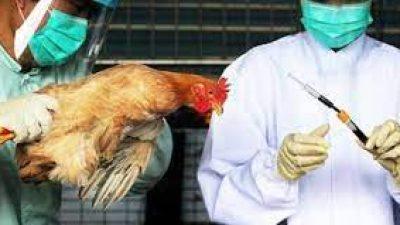 Π.Ε Σερρών : Ενημέρωση για τη γρίπη των πτηνών