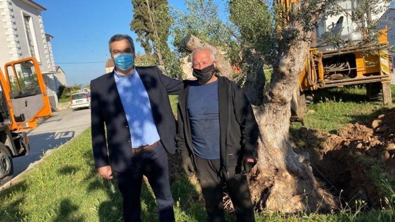 Δήμος Εμμανουήλ Παππά : Υπεραιωνόβια ελιά στον περιβάλλοντα χώρο του Δημαρχείου