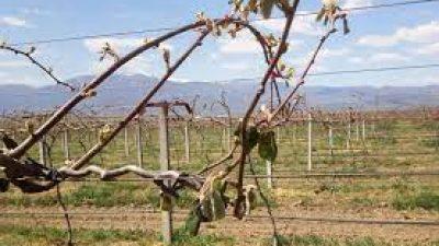 Δήμος Βισαλτίας : Αποζημίωση σε δημότη για ζημιά σε γεωργικη καλλιέργεια