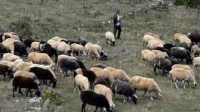 Π.Ε Σερρών : Πρόγραμμα περισυλλογής και διαχείρισης κάθε είδους νεκρών ζώων